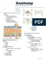 2.01 Introduction to Back and Upper Extremities and Osteology Back Topography, Spaces and Triangles.docx