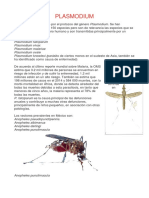 Plasmodium Practica