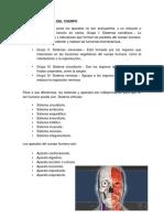 Organo y Sistema Del Cuerp1
