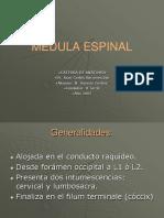 Medula Espinal1699