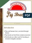 Pig Breeds & Breeding