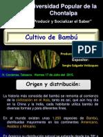 cultivobambu-150907041020-lva1-app6892