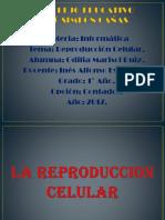 Reproduccion Celular Odilia