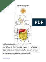 Anatomia Si Fiziologia Sistemul Digestiv