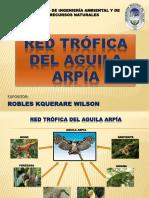 Red Tofica Del Aguila Arpia