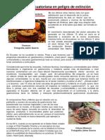 Cocina Ecuatoriana en Peligro[1]
