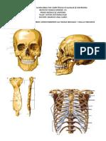 003-Taller de Huesos y Articulaciones