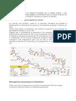 Fermentación-conceptos.pdf