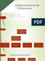 Sistema Respiratorio-Embriología