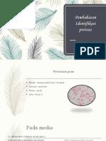 Pembahasan Identifikasi Proteus