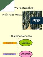 pares-craneales.ppt