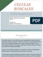 CELULAS TRONCALES