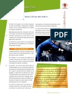ficha_molibdeno.pdf