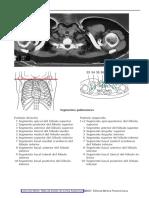 321861957-Coleccion-Moller-Atlas-de-Bolsillo-de-Cortes-Anatomicos2007.pdf