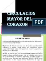 Circulacion Mayor Del Corazon