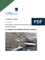 Rapport Echouage Poisson