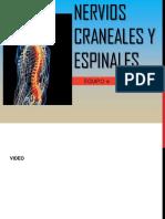 Nervios Craneales y Espinales 2