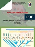 Filo Artrópoda