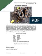 Boa Constrictor A