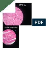 Histolabws2 Pics
