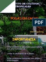 Podas Del Cacao