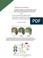 Tejido de Las Plantas