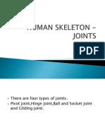 Human Skeleton -Joints