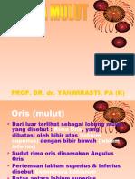 4.17 Anatomi Rongga Mulut