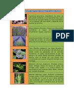plantas-insecticidas.pdf