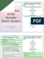 Examination of Motor System