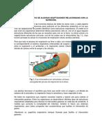 Análisis Comparativo de Algunas Adaptaciones Relacionadas Con La Nutrición