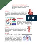 Componentes Del Sistema Cardiovascular