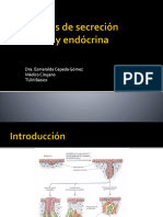 glandulas.pptx