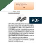 5º Básico Lenguaje y Comunicación Prueba de Diagnóstico