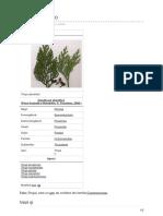 Ro.wikipedia.org-Tuia Gen Plante