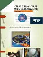 Estructura y Funcion de Los Organelos Celulares