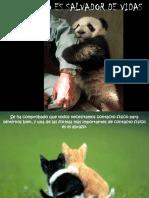 [PD] Presentaciones - Los Abrazos