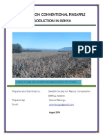 Conventional Pineaple Production Kenya