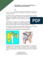Biomecánica Del Hombro PDF