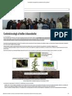 Insecticide Si Fungicide Bio _ Metode Pentru Gradinari