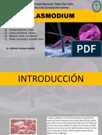 6. Plasmodium Taller