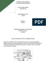 346518515-Trabajo-Paso-1-Felipe-Amaya-Reproduccion-Avanzada.pptx