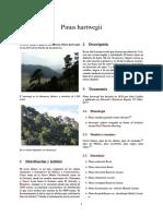 Pinus Hartwegii