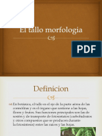 El Tallo Morfologia