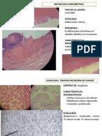 1. Patología Microscopía 1º Semana