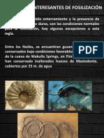 Ejemplos Interesantes de Fosilización