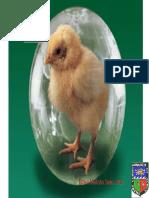 Produccion Aves