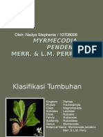 10708006_Myrmecodia pendens