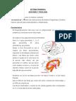 Sindrome-Piramidal-y-Extrapiramidal.pdf