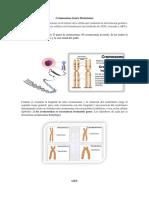 Cromosomas Genes Mutaciones.docx